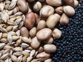 wheat-rape-beans(940)